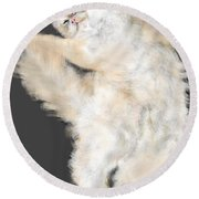 The Stretching Cat Round Beach Towel