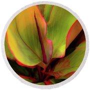 The Ti Leaf Plant In Hawaii Round Beach Towel