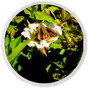 The Tiniest Skipper Butterfly In The Garden Round Beach Towel