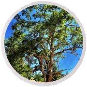 The Turtleback Tree Round Beach Towel by Lorraine Devon Wilke