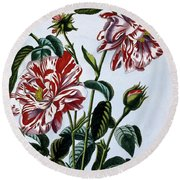 The Variegated Rose Of England Round Beach Towel