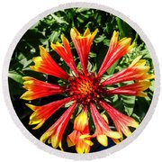 The Vibrant Blanket Flower Round Beach Towel