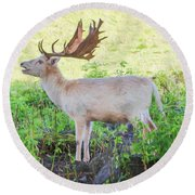 The White Stag 2 Round Beach Towel