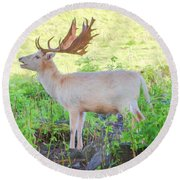 The White Stag 3 Round Beach Towel