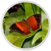 The Wizard Butterfly Round Beach Towel