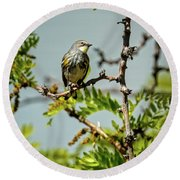 The  Yellow-rumped Warbler Round Beach Towel