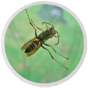 Thin Waisted Wasp On Door Glass     October  Indiana Round Beach Towel
