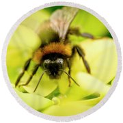 Thirsty Bumble Bee. Round Beach Towel