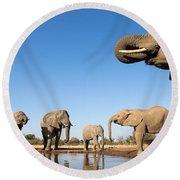 Thirsty Elephants Round Beach Towel