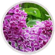 This Lilac Has Flowers With A White Edging.1 Round Beach Towel