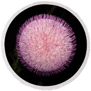 Thistle Bloom At Night Round Beach Towel
