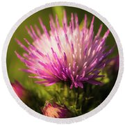 Thistle Flowers Round Beach Towel