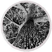 Thorn Tree Black And White Round Beach Towel