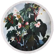 Thornton: Begonia Round Beach Towel