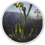 Thornton: Bog Plants Round Beach Towel