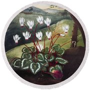 Thornton: Cyclamen Round Beach Towel