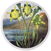 Thornton: Pitcher Plant Round Beach Towel