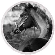 Thoroughbred - Black And White Round Beach Towel