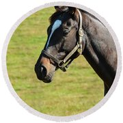 Thoroughbred Portrait Three Round Beach Towel