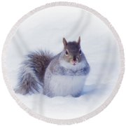 Thoughtful Gray Squirrel Round Beach Towel