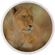 Thoughtful Lioness - Horizontal Round Beach Towel