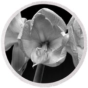 Three Amaryllis  Black And White Print Round Beach Towel