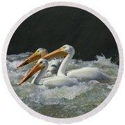 Three American Pelicans Round Beach Towel