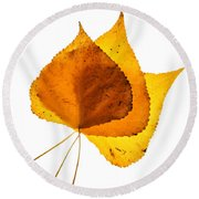 Three Backlit Cottonwood Leaves In Autumn On White Round Beach Towel
