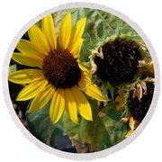 Three Beautiful Sunflower Round Beach Towel
