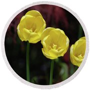 Three Blooming Yellow Tulips Of Different Heights Round Beach Towel