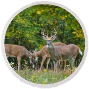 Three Bucks_0054_4463 Round Beach Towel