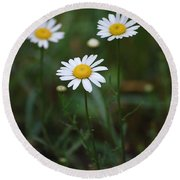 Three Daisy's Round Beach Towel