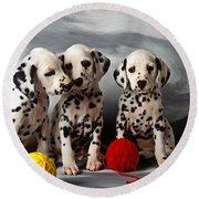 Three Dalmatian Puppies  Round Beach Towel