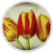 Three Dew Covered Tulips Round Beach Towel