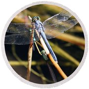Three Dragonflies On One Reed Round Beach Towel