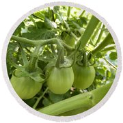 Three In A Row Green Tomatoes Round Beach Towel
