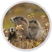Three Marmots 2 Round Beach Towel