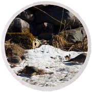 Three Mourning Doves Round Beach Towel