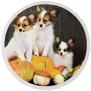 three puppy with pumpkin by Iuliia Malivanchuk Round Beach Towel