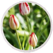 Three Striped Tulips Round Beach Towel