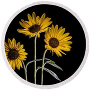 Three Sunflowers Light Painted On Black Round Beach Towel