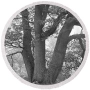 Three Trunk Tree, Whitley Mill Round Beach Towel