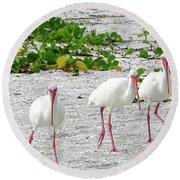 Three White Ibis Walking On The Beach Round Beach Towel