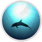 three year old Dolphin  Round Beach Towel by Hagai Nativ