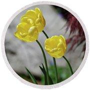 Three Yellow Garden Tulips Flowering In Spring Round Beach Towel