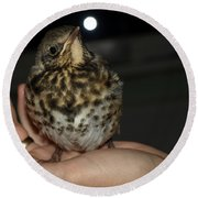 Thrush Round Beach Towel