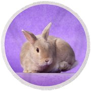 Thump Gorgeous Dwarf Rabbit Stamps His Foot  Round Beach Towel