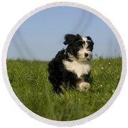 Tibetan Terrier Puppy Round Beach Towel