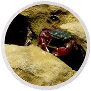 Tide Pool Crab 1 Round Beach Towel