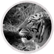 Tiger 2 Bw Round Beach Towel